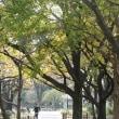 武蔵野中央公園の秋 その1