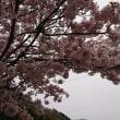 名残の桜華