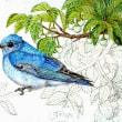 途中経過3 (エゴノキと青い鳥)