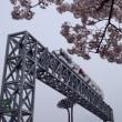桜満開のニンジニアスタジアム