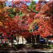 〔気まぐれ写真-78〕 滋賀県 紅葉の名所 永源寺