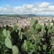 古代遺跡がある地下資源が豊富なサボテンの国