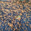 秋雨前線が停滞