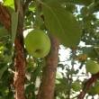 果樹それぞれ