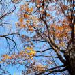 移ろう季節・・・枯木が主役へ