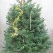 クリスマスツリー10寸鉢(縦100㎝)を入荷致しました。(クリスマス用)