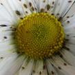 閲覧注意~綺麗な花には・・・アブラムシ!~