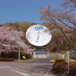 JAXA地球観測センターの春20170414