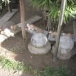 狸の夫婦と、亀の子供たち