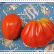 変なトマト