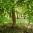 五月の森、静寂の午後。