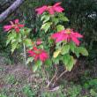 島の花の写真・12月