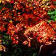 殿ケ谷戸庭園(国分寺)の紅葉です。