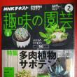 NHKテキスト『趣味の園芸』2月号に、トミーの記事が掲載されておりますので、ぜひご覧くださいね。