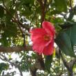 神代植物園に春到来