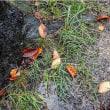 10月19日(木) 冷たい雨