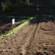 高麗人参栽培 新規栽培地
