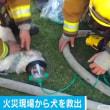 火事に巻き込まれた犬救出