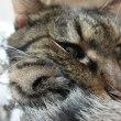 猫とワープロ記念日