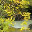 我妻渓谷…紅葉、今ごろはちょうどいいかもしんないけど、ワシが行ったときはちょっと早かった