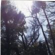 ゼロ磁場 西日本一 氣パワー 開運引き寄せスポット 大宇宙と木霊(4月22日)