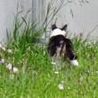 地域猫が脱走?