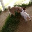 犬連れ 初のBBQ