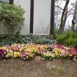 那須のオルゴールミュージアムの一角で (2018年4月10日撮影)