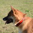 16年大晦日の愛犬