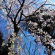 春爛漫とつる姫の旧作シアター~ラスト・エンペラー~