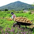 野菜の収穫 Ⅱ