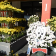 高幡不動尊の菊まつり