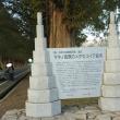 毘沙門堂・白髭神社・メタセコイヤ並木に行ってきました