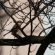 12月9日の鳥撮り散歩・・・