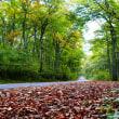 大山の紅葉 2018年 チャプター⑨ 環状道路