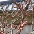 春が近づいてきました。