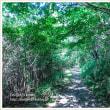 登山道 Vol.1 緑のトンネル