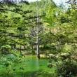 新緑の季節 ヘブンスそのはらで森林セラピー