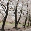 満開の桜に誘われて。上州の名山・麓の桜旅・1 ~赤城南面千本桜