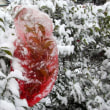 とうとう初積雪