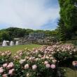 「須磨離宮公園」バラ園~傘亭と月見台休憩所へ