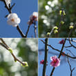 花の季節 一歩手前