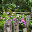 矢田寺の十三仏と紫陽花