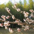 春の到来!