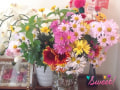 Sweetな菊たち