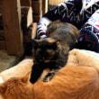 猫とかカブとか日常話しと、多勢の人前で話しをするテクニック?まるの日編。