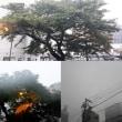 9月30日(日)今日の北川桜