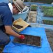 自然菜園スクール「自然育苗タネ採りコース」後半(育苗土の再発酵&温床で種まき準備、タマネギ育苗)