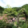 埼玉県毛呂山町 春のバラまつり 2018年5月19日