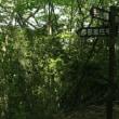 桐生市広沢の賀茂神社西側にある手臼山&杉ノ入山に行ってきた。